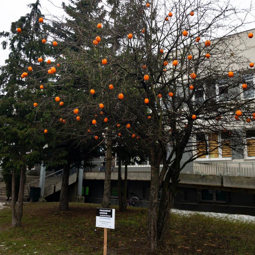 Pomarańcze na drzewie przed szpitalem na Zaspie. Nowy sposób na promocję badań profilaktycznych