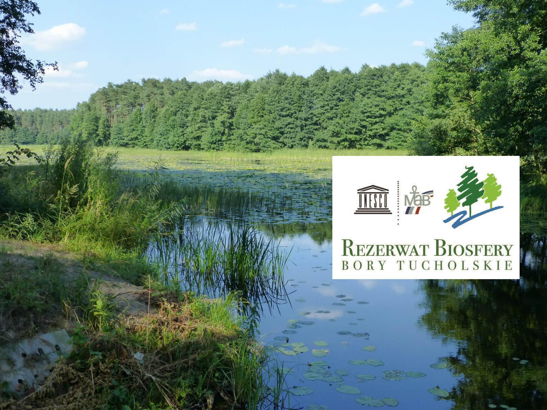10 lat temu powołano Rezerwat Biosfery Bory Tucholskie. To unikatowy obszar w skali Europy