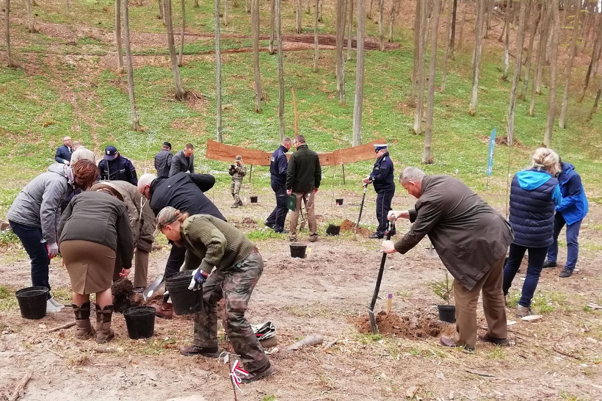 100 drzew posadzono w Gdyni. Mają upamiętniać stulecie odzyskania przez Polskę niepodległości