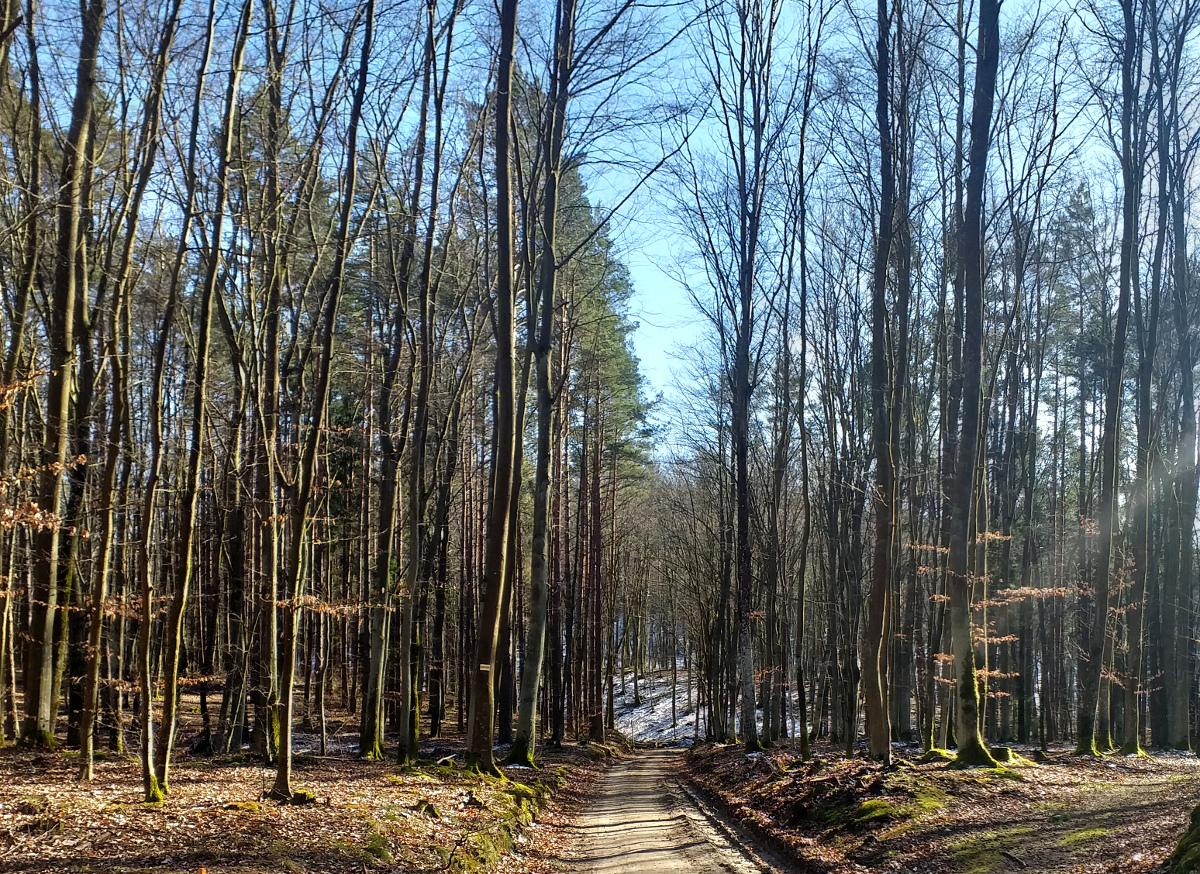 Do Wielkiej Soboty nie możemy wchodzić do państwowych lasów. Zakaz może zostać jednak przedłużony