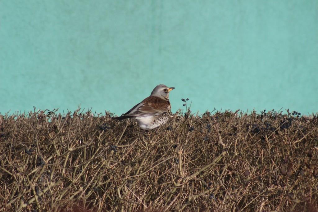 Dokarmiasz ptaki zimą? Dowiedz się, które z nich zostają w Polsce na zimne miesiące i jak im pomagać