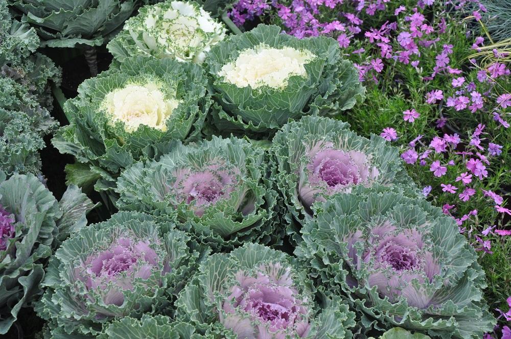 Dobre jedzenie, kwiaty, krzewy, rośliny cebulowe i nasiona. Jubileuszowe Jesienne Targi Ogrodnicze w Starym Polu