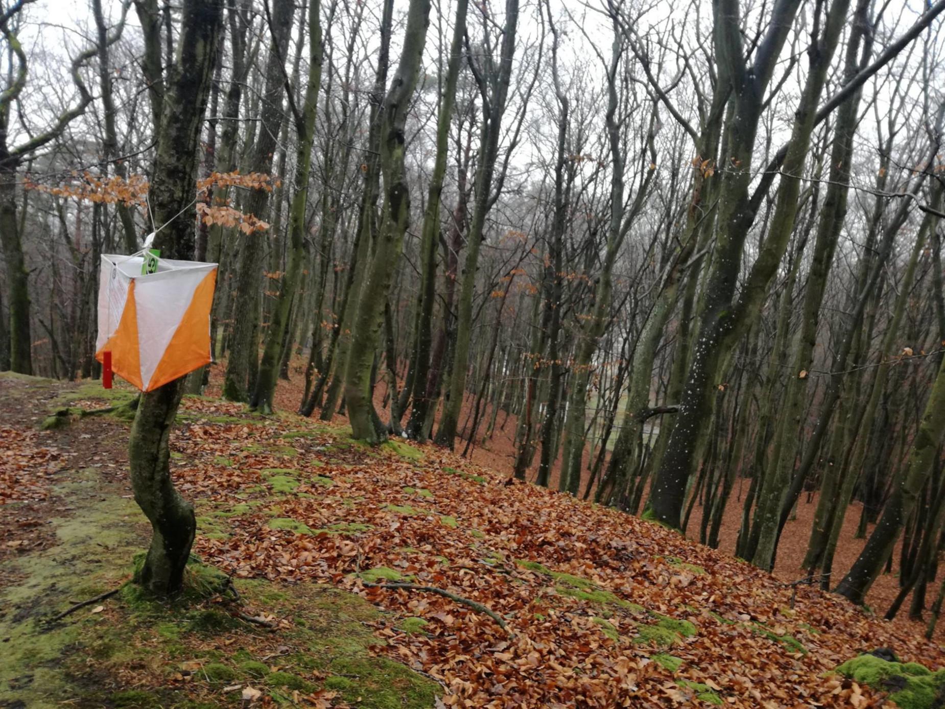 Biegiem z mapą przez lasy Kiełpina Górnego. Kolejny dzielnicowy Harpuś już w niedzielę