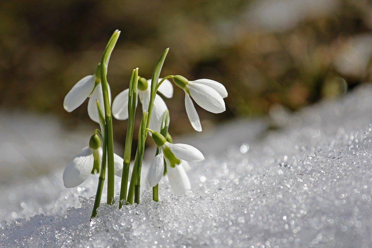 Równonoc, zmiana czasu i… złe samopoczucie. Nadciąga wiosna